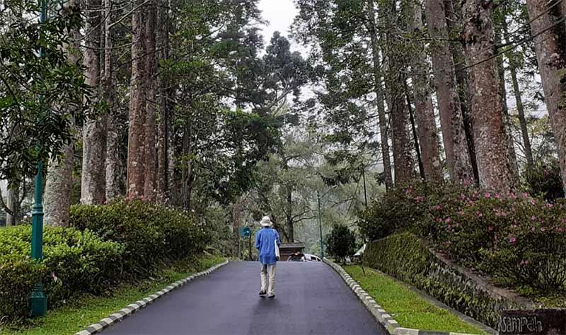 Wisata Alam Di Kebun Raya Cibodas Ntd Indonesia