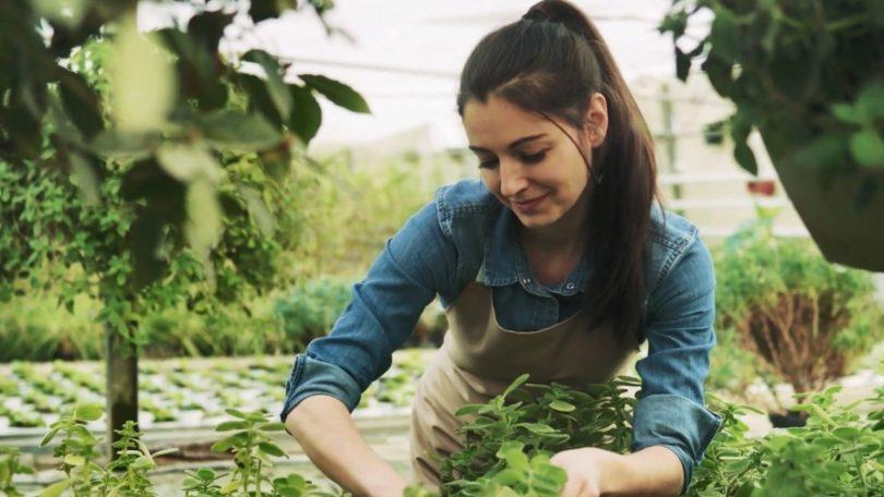 Pupuk untuk tanaman (Screenshot @Storyblocks)